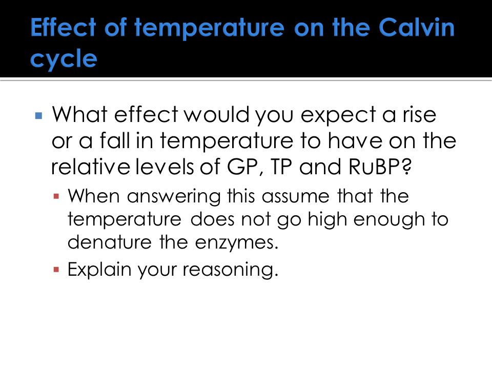 Effect of temperature on the Calvin cycle  What effect would you expect a rise or a fall in temperature to have on the relative levels of GP, TP and RuBP.