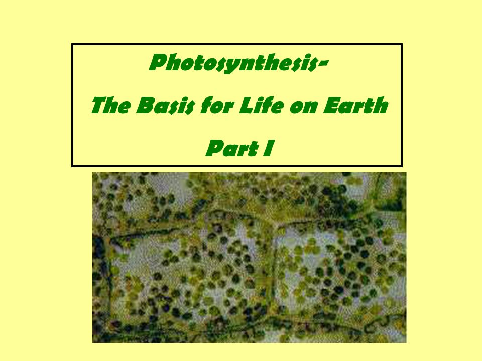 Which of the following conclusions does not make sense from studying the absorption spectrum for chlorophyll a and the action spectrum for photosynthesis .