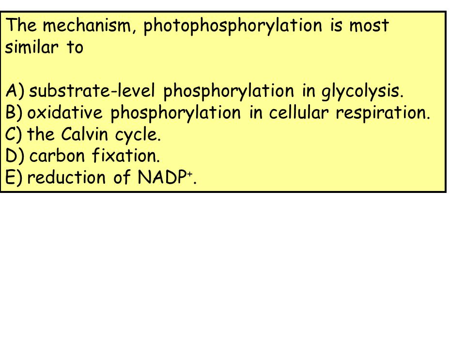 The mechanism, photophosphorylation is most similar to A) substrate-level phosphorylation in glycolysis. B) oxidative phosphorylation in cellular resp