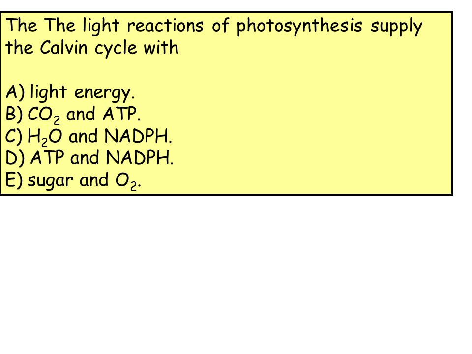 D The purpose of the light reaction is to provide the Calvin cycle with the necessary chemical energy needed to reduce CO 2 in the formation of a carbohydrate in the form of ATP and NADPH.