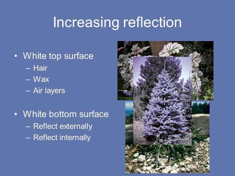 Increasing reflection White top surface –Hair –Wax –Air layers White bottom surface –Reflect externally –Reflect internally