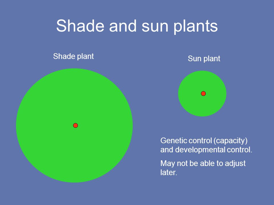 Shade and sun plants Sun plant Shade plant Genetic control (capacity) and developmental control.