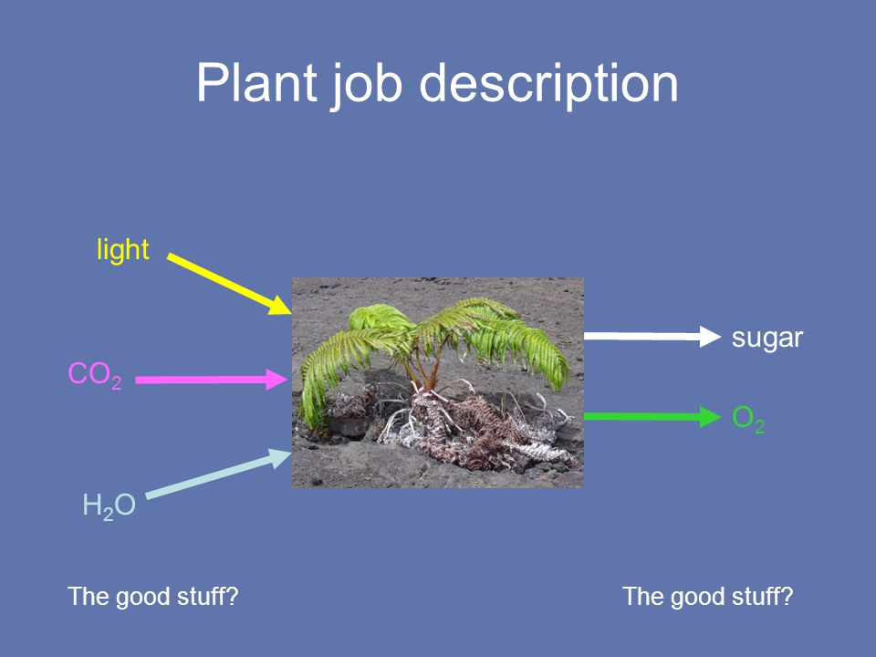 Problem solving at every level Plant orientation Leaf orientation Leaf spectral characteristics Protective pigments –Constituitive –Induced Repair Sometimes it still fails