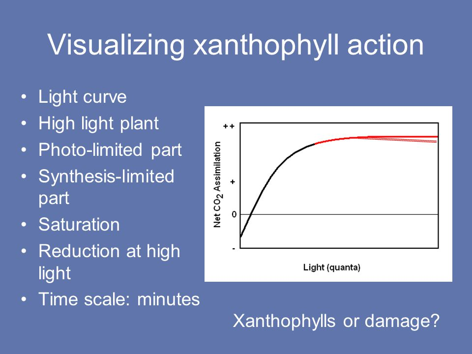 Visualizing xanthophyll action Light curve High light plant Photo-limited part Synthesis-limited part Saturation Reduction at high light Time scale: minutes Xanthophylls or damage
