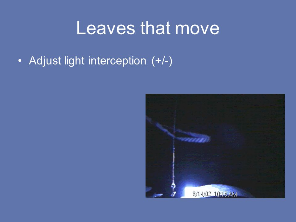 Leaves that move Adjust light interception (+/-)