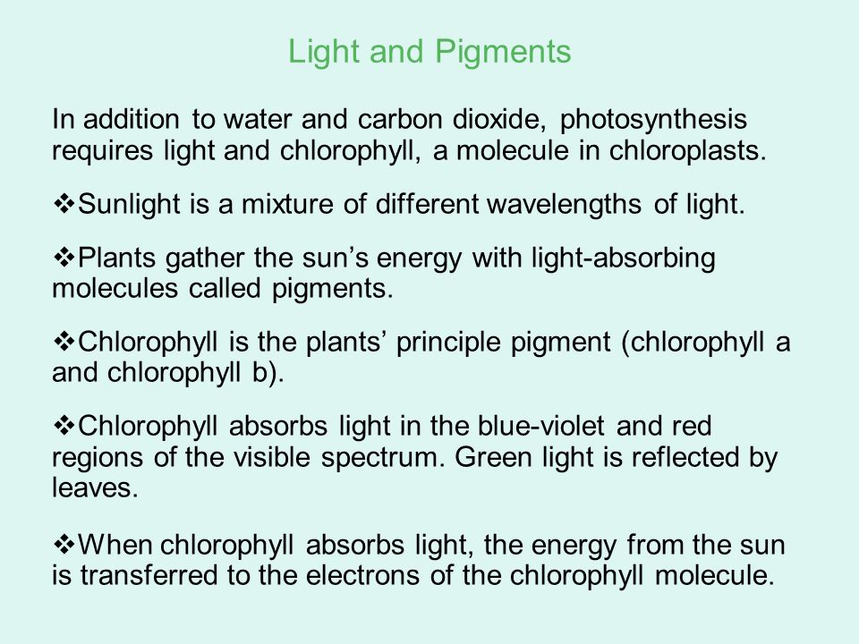 Go to Section: Light and Pigments In addition to water and carbon dioxide, photosynthesis requires light and chlorophyll, a molecule in chloroplasts.