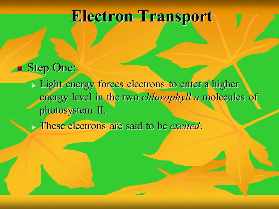 Electron Transport Step One: Step One:  Light energy forces electrons to enter a higher energy level in the two chlorophyll a molecules of photosyste