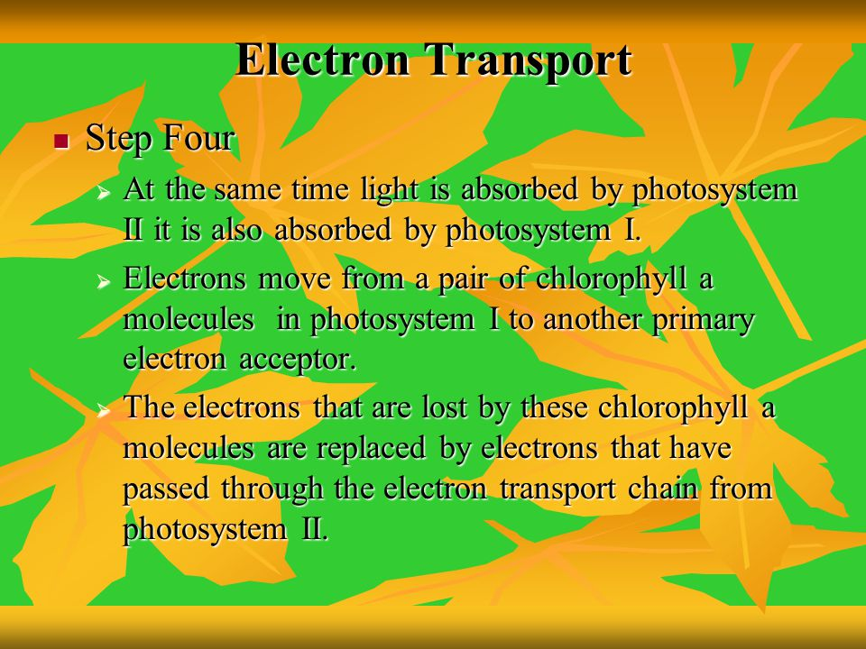 Electron Transport Step Four Step Four  At the same time light is absorbed by photosystem II it is also absorbed by photosystem I.  Electrons move f