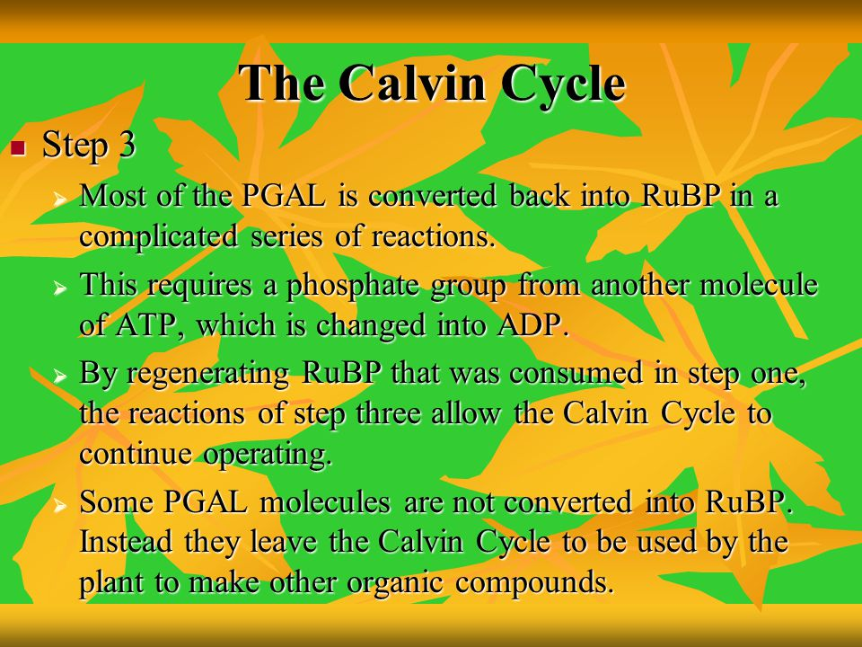 The Calvin Cycle Step 3 Step 3  Most of the PGAL is converted back into RuBP in a complicated series of reactions.