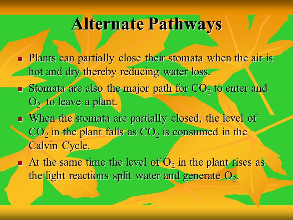 Alternate Pathways Plants can partially close their stomata when the air is hot and dry thereby reducing water loss.