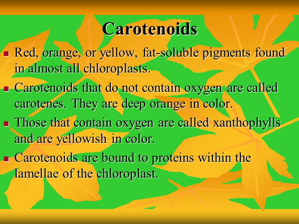 Carotenoids Red, orange, or yellow, fat-soluble pigments found in almost all chloroplasts. Red, orange, or yellow, fat-soluble pigments found in almos