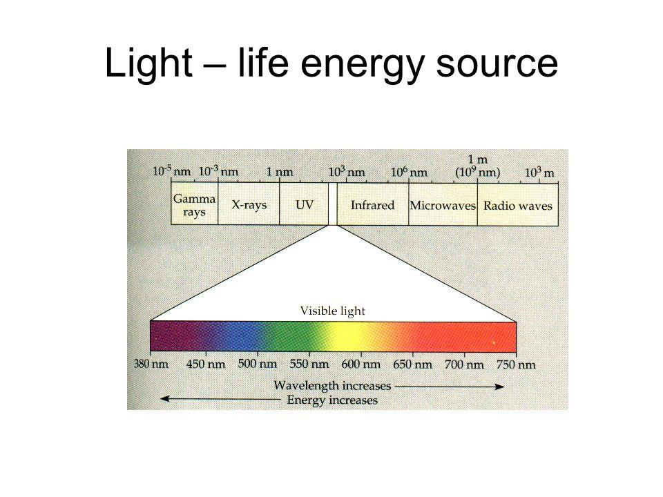 Light – life energy source