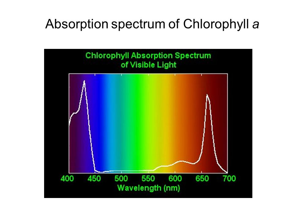Absorption spectrum of Chlorophyll a