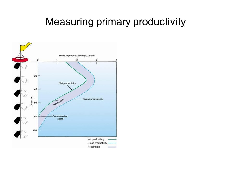 Measuring primary productivity