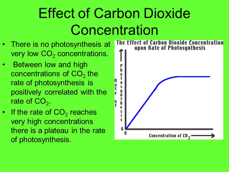 Effect of Carbon Dioxide Concentration There is no photosynthesis at very low CO 2 concentrations. Between low and high concentrations of CO 2 the rat
