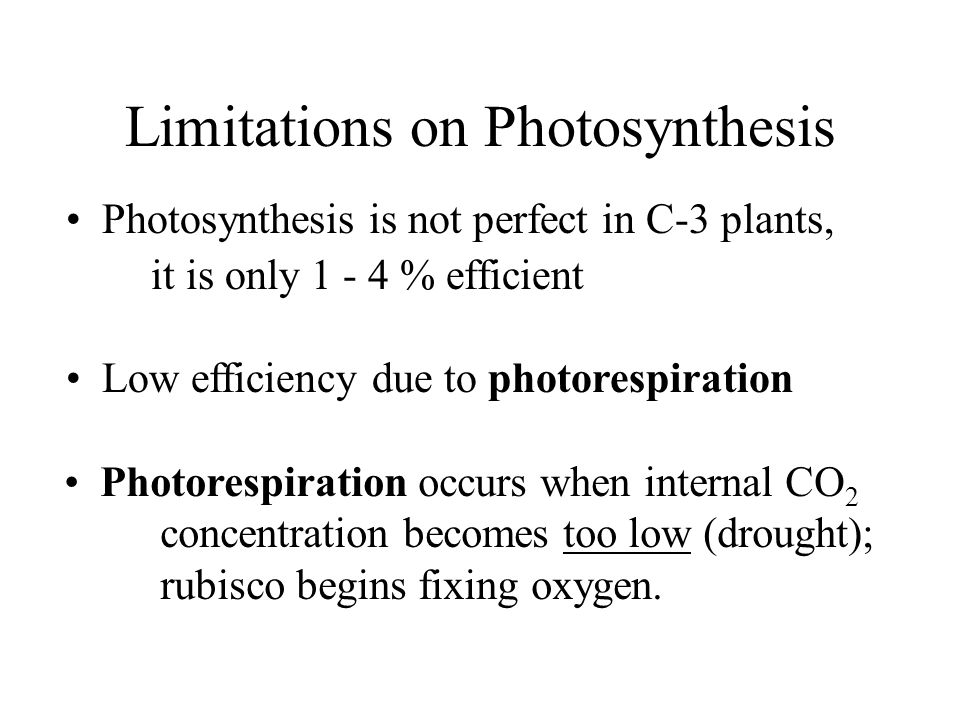 Limitations on Photosynthesis Photosynthesis is not perfect in C-3 plants, it is only 1 - 4 % efficient Low efficiency due to photorespiration Photorespiration occurs when internal CO 2 concentration becomes too low (drought); rubisco begins fixing oxygen.
