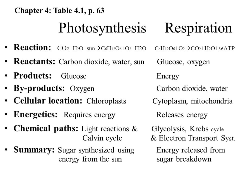 Photosynthesis Respiration Reaction: CO 2 +H 2 O+sun  C 6 H 12 O 6 +O 2 +H2O C 6 H 12 O 6 +O 2  CO 2 +H 2 O+ 36 ATP Reactants: Carbon dioxide, water, sun Glucose, oxygen Products: Glucose Energy By-products: Oxygen Carbon dioxide, water Cellular location: Chloroplasts Cytoplasm, mitochondria Energetics: Requires energy Releases energy Chemical paths: Light reactions & Glycolysis, Krebs cycle Calvin cycle & Electron Transport S yst.