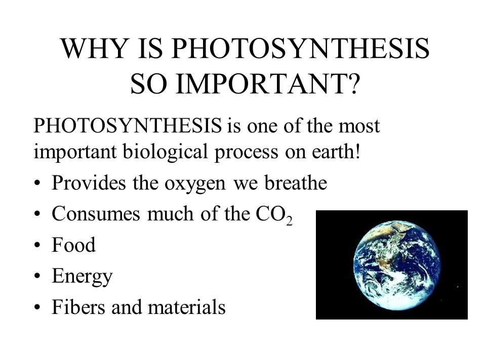 WHY IS PHOTOSYNTHESIS SO IMPORTANT.