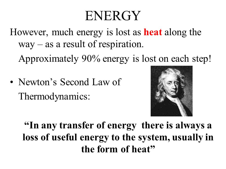 ENERGY However, much energy is lost as heat along the way – as a result of respiration.