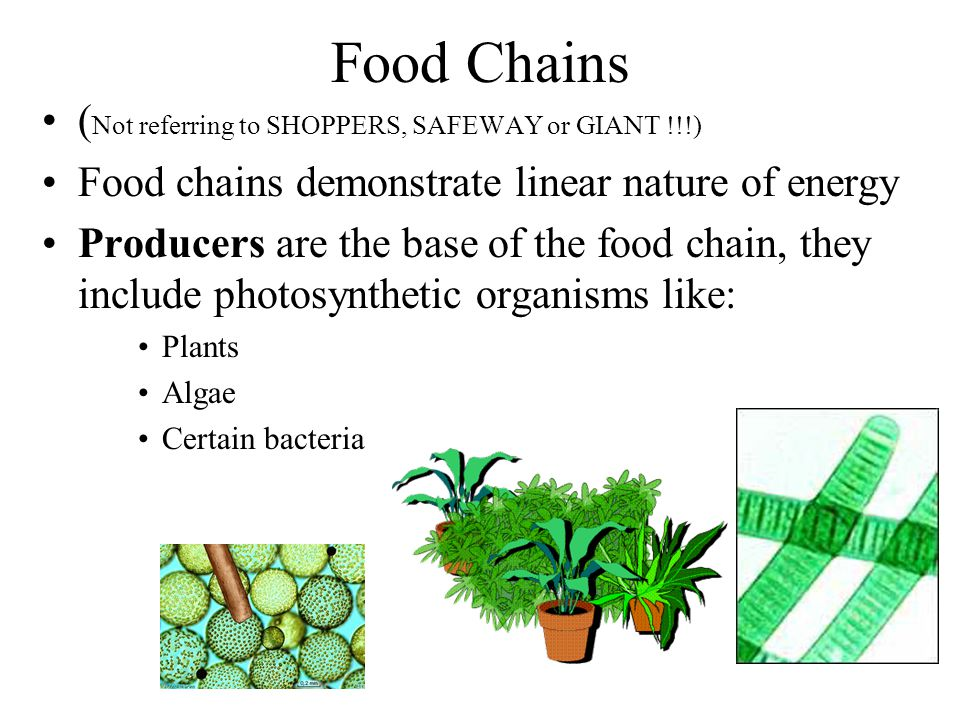 Food Chains ( Not referring to SHOPPERS, SAFEWAY or GIANT !!!) Food chains demonstrate linear nature of energy Producers are the base of the food chain, they include photosynthetic organisms like: Plants Algae Certain bacteria