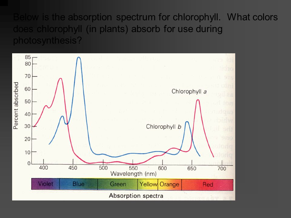 Below show how a spectrophotometer works.