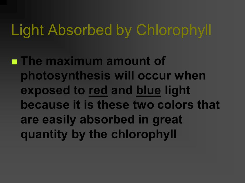 Below is the absorption spectrum for chlorophyll. What colors does chlorophyll (in plants) absorb for use during photosynthesis?