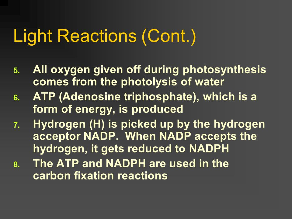 1. Light Reaction (Photochemical Reactions) 1. Occurs in the grana of the chloroplast 2. First stage of photosynthesis 3. Begins with the absorption o