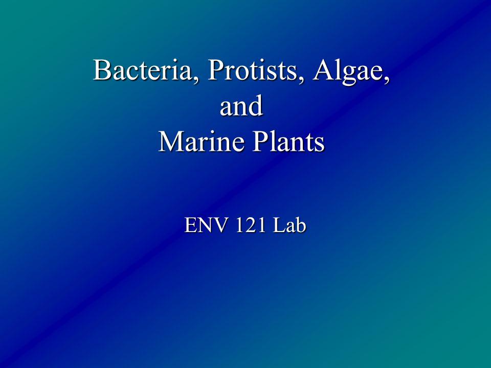 Bacteria, Protists, Algae, and Marine Plants ENV 121 Lab