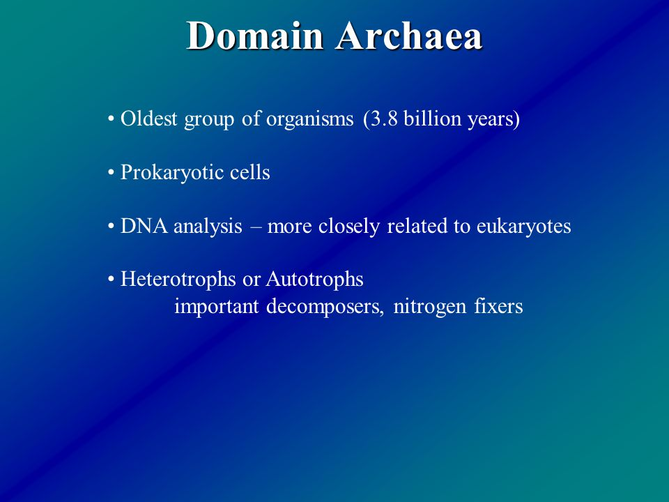 Domain Archaea Oldest group of organisms (3.8 billion years) Prokaryotic cells DNA analysis – more closely related to eukaryotes Heterotrophs or Autot