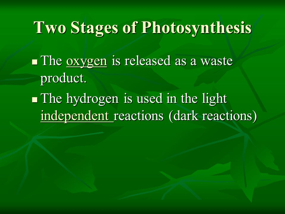 Two Stages of Photosynthesis The oxygen is released as a waste product. The oxygen is released as a waste product. The hydrogen is used in the light i