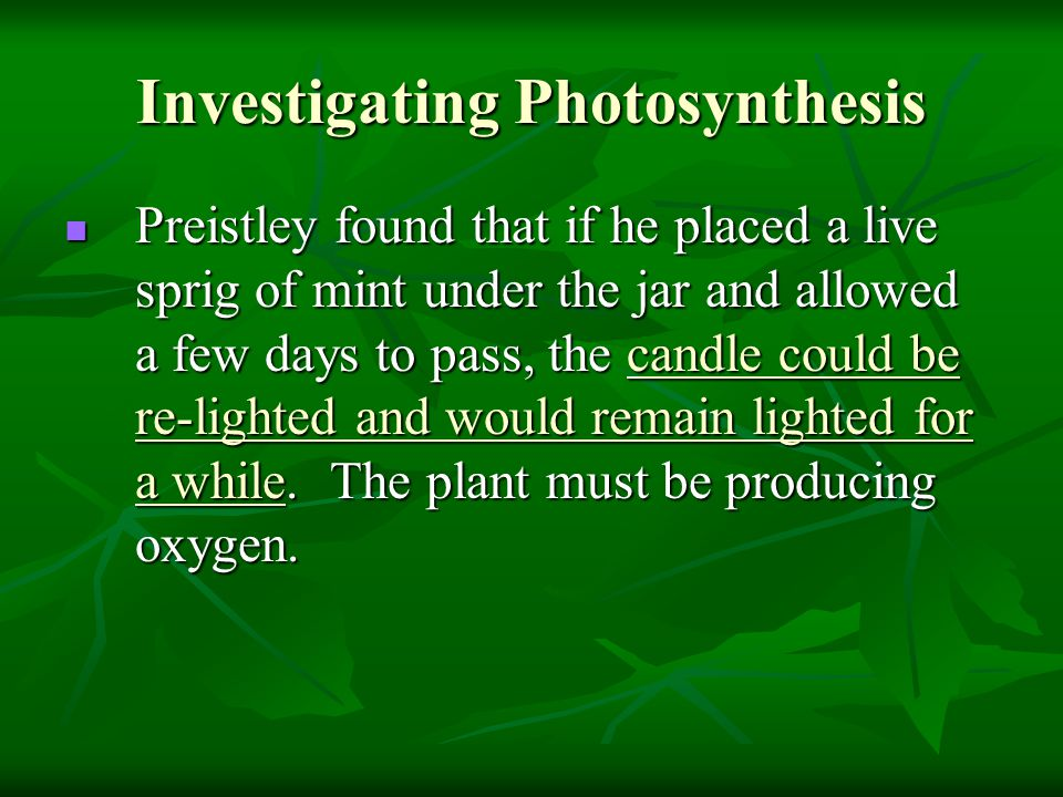 Investigating Photosynthesis Preistley found that if he placed a live sprig of mint under the jar and allowed a few days to pass, the candle could be