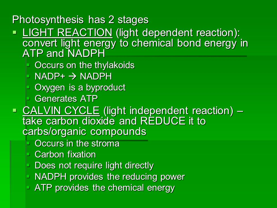 Photosynthesis has 2 stages  LIGHT REACTION (light dependent reaction): convert light energy to chemical bond energy in ATP and NADPH  Occurs on the