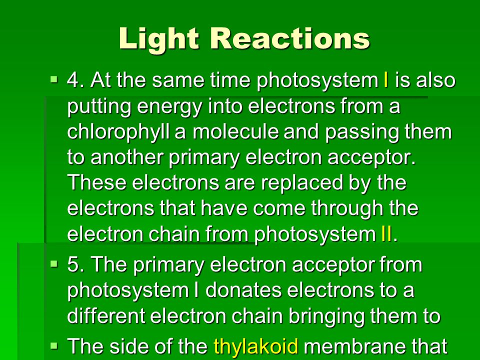 Light Reactions  4. At the same time photosystem I is also putting energy into electrons from a chlorophyll a molecule and passing them to another pr