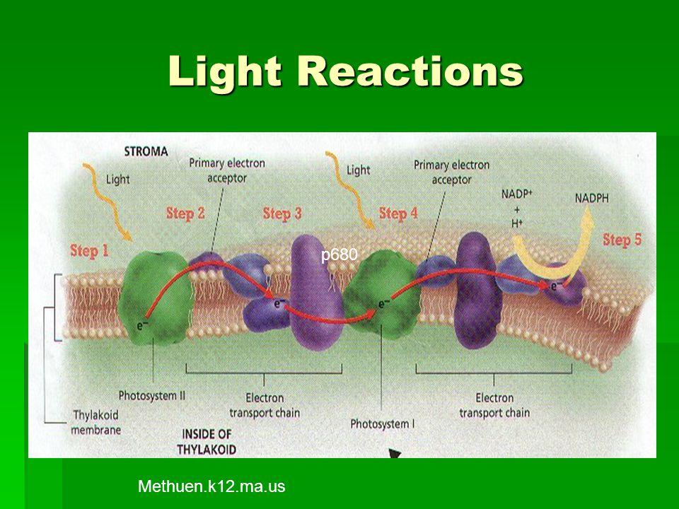 Light Reactions p680 Methuen.k12.ma.us