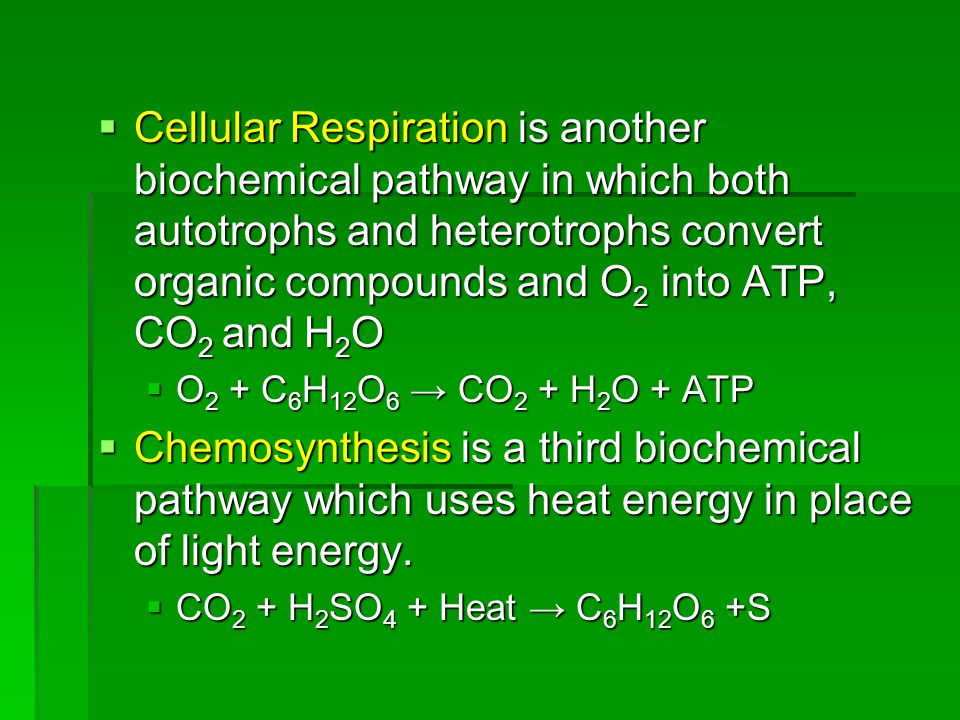  Cellular Respiration is another biochemical pathway in which both autotrophs and heterotrophs convert organic compounds and O 2 into ATP, CO 2 and H