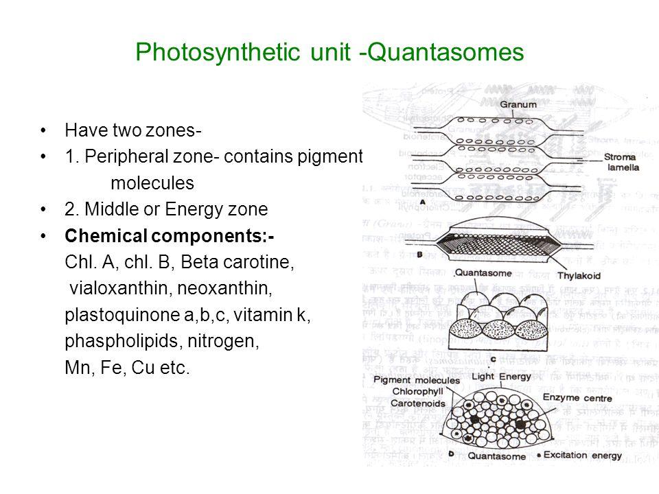 Photosynthetic unit -Quantasomes Have two zones- 1.