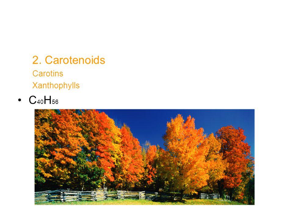 2. Carotenoids Carotins Xanthophylls C 40 H 56