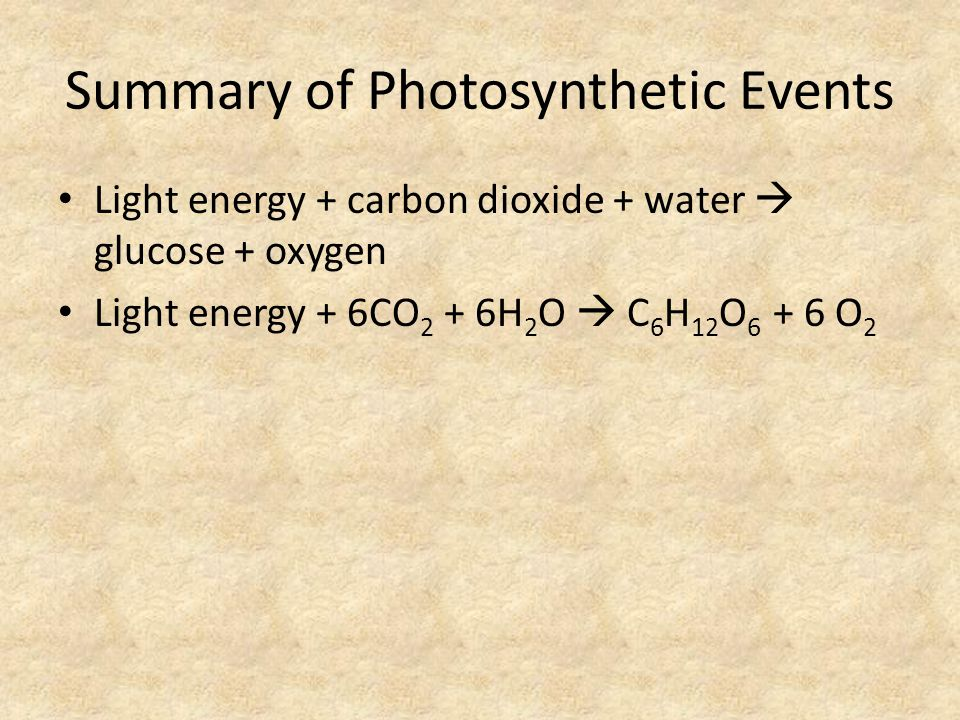 Summary of Photosynthetic Events Light energy + carbon dioxide + water  glucose + oxygen Light energy + 6CO 2 + 6H 2 O  C 6 H 12 O 6 + 6 O 2