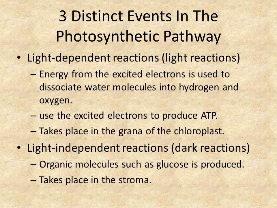 3 Distinct Events In The Photosynthetic Pathway Light-dependent reactions (light reactions) – Energy from the excited electrons is used to dissociate water molecules into hydrogen and oxygen.