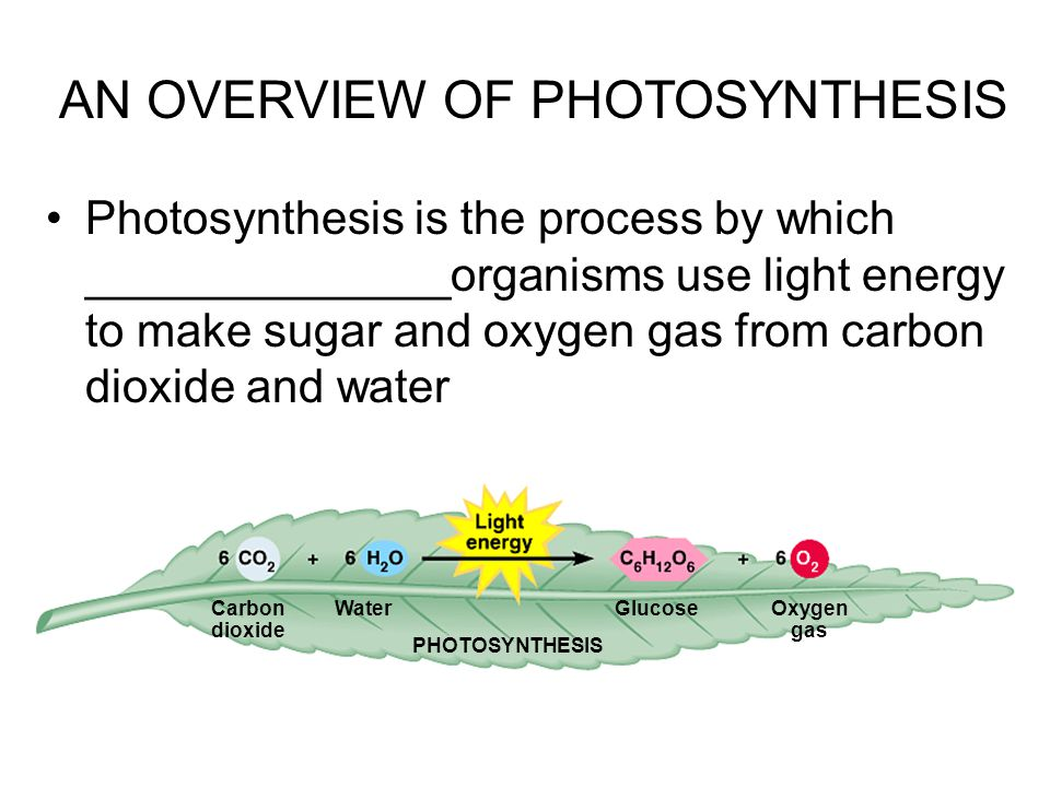 Photosynthesis is the process by which ______________organisms use light energy to make sugar and oxygen gas from carbon dioxide and water AN OVERVIEW