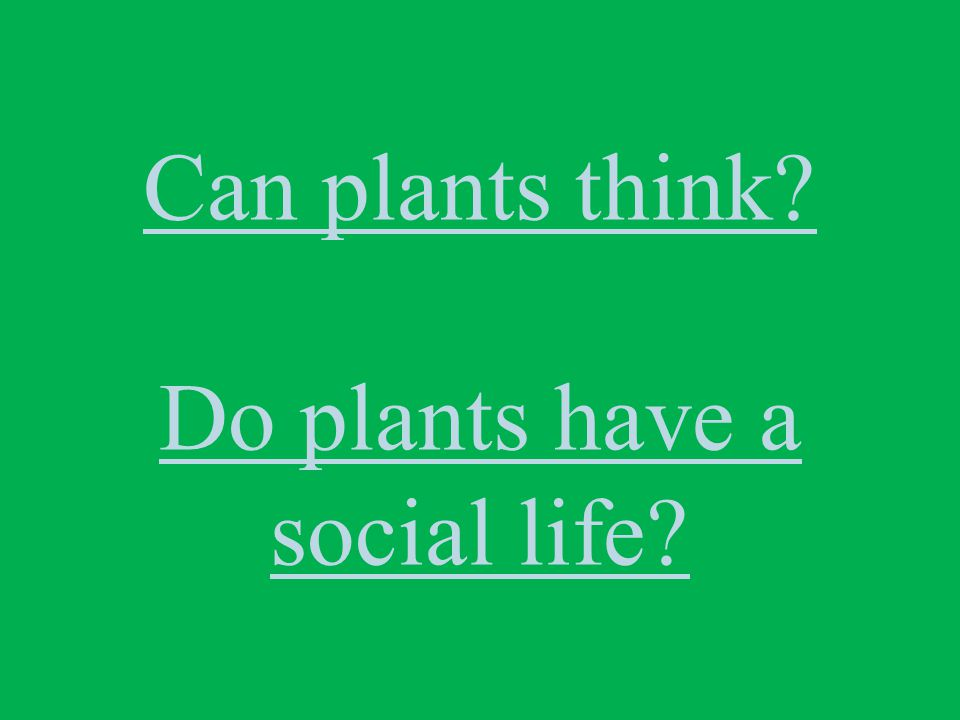 Can plants think? Do plants have a social life?