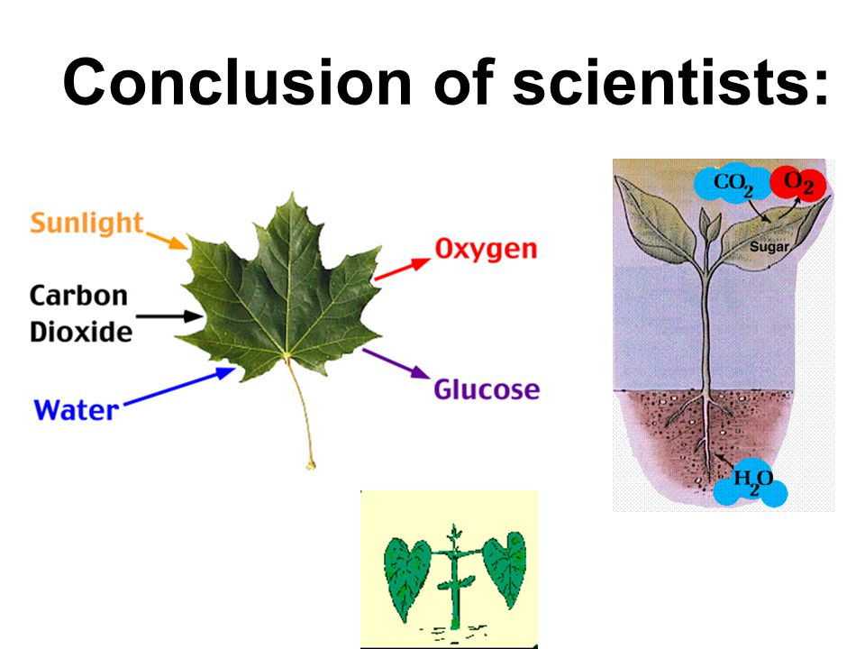 Conclusion of scientists: