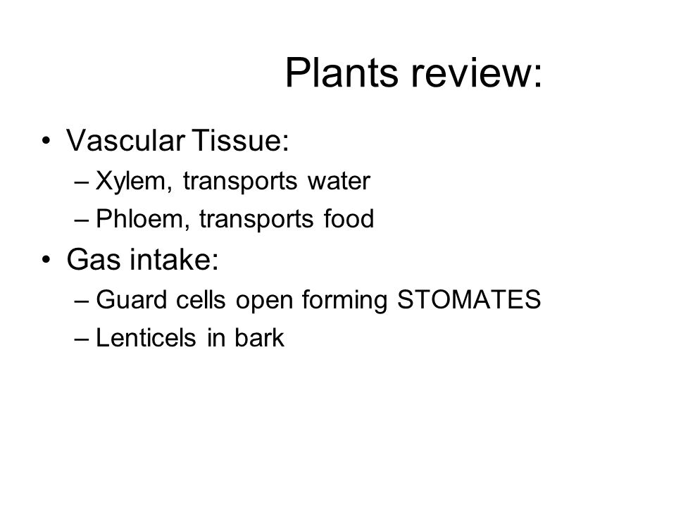 Plants review: Vascular Tissue: –Xylem, transports water –Phloem, transports food Gas intake: –Guard cells open forming STOMATES –Lenticels in bark