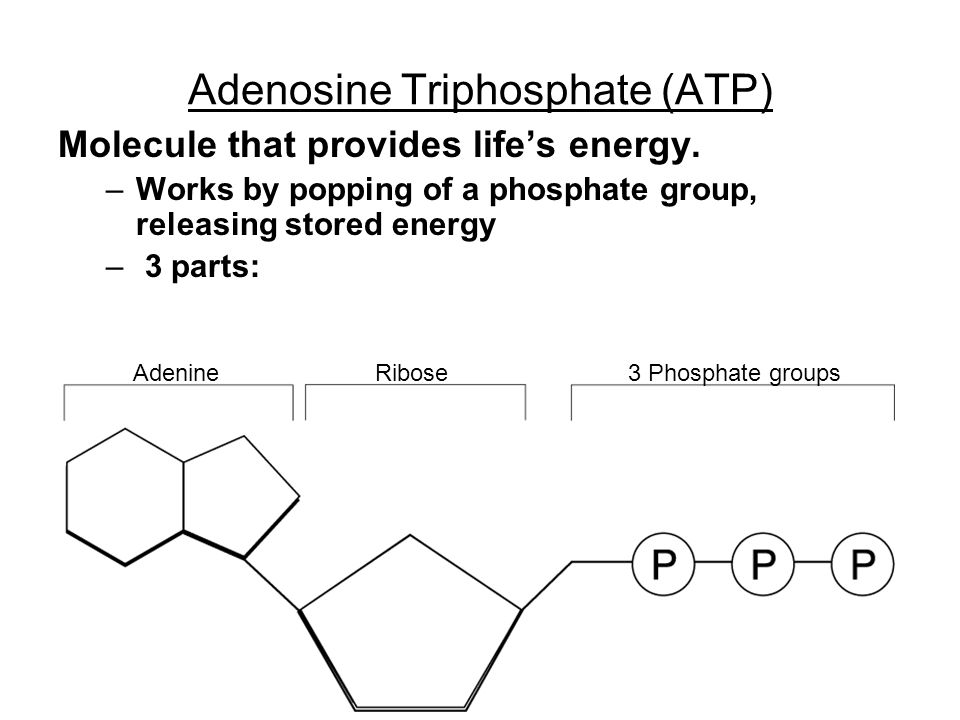 Adenosine Triphosphate (ATP) Molecule that provides life's energy. –Works by popping of a phosphate group, releasing stored energy – 3 parts: AdenineR