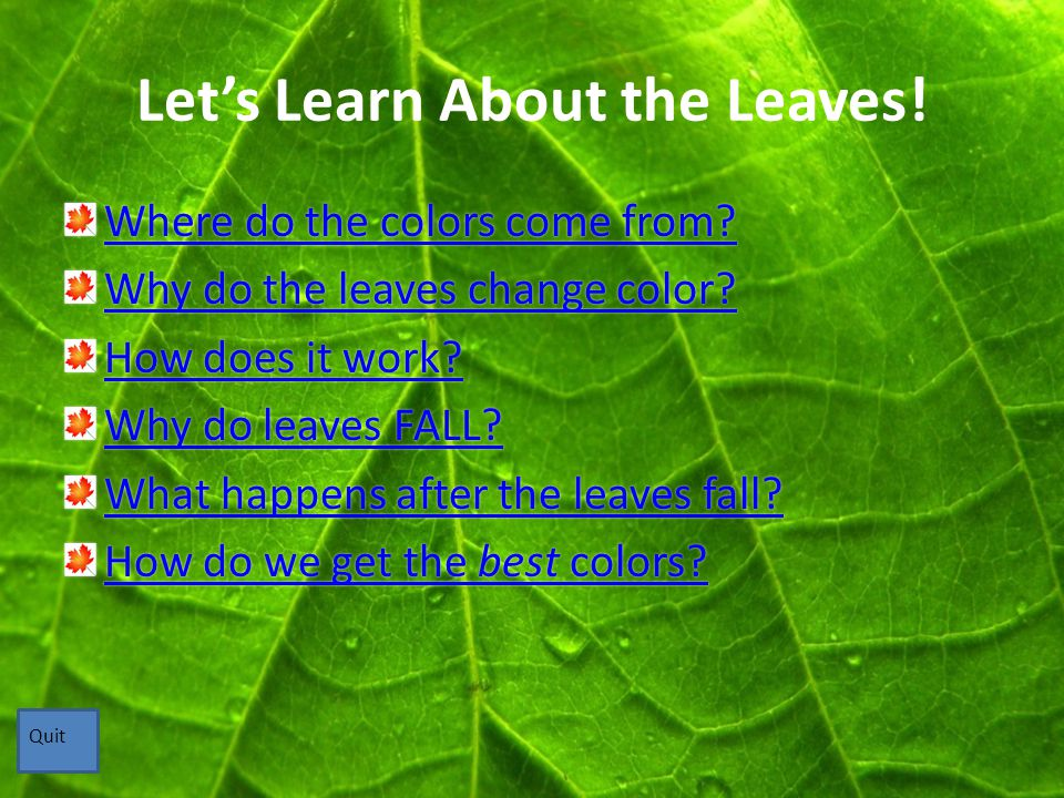 Where do the colors come from.Leaves have pigments that give them their color.