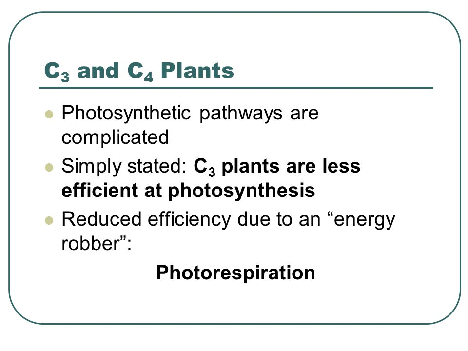 C 3 and C 4 Plants Photosynthetic pathways are complicated Simply stated: C 3 plants are less efficient at photosynthesis Reduced efficiency due to an energy robber : Photorespiration