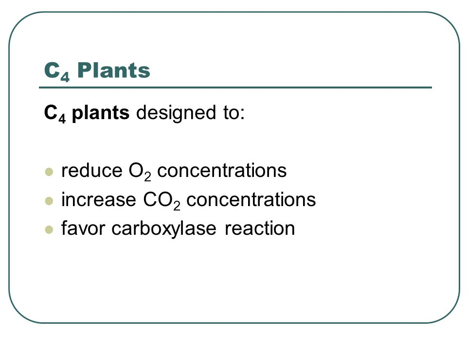 C 4 Plants C 4 plants designed to: reduce O 2 concentrations increase CO 2 concentrations favor carboxylase reaction