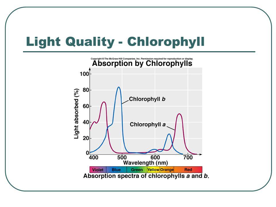 Light Quality - Chlorophyll
