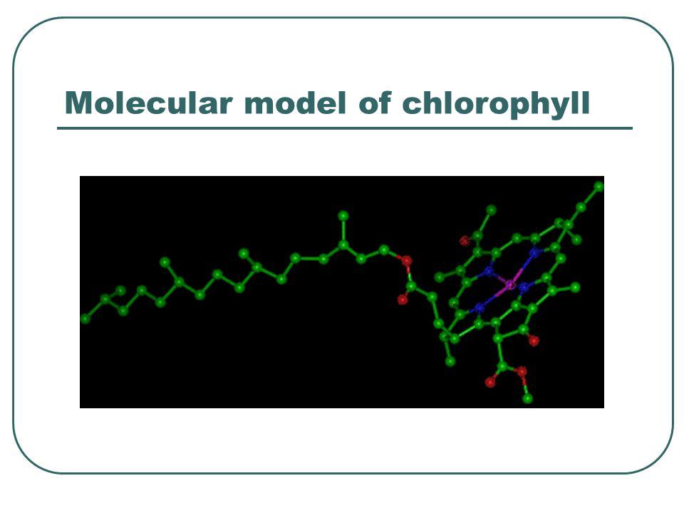 Molecular model of chlorophyll