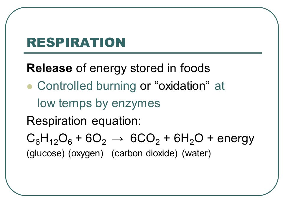 RESPIRATION Release of energy stored in foods Controlled burning or oxidation at low temps by enzymes Respiration equation: C 6 H 12 O 6 + 6O 2 → 6CO 2 + 6H 2 O + energy (glucose) (oxygen)(carbon dioxide) (water)